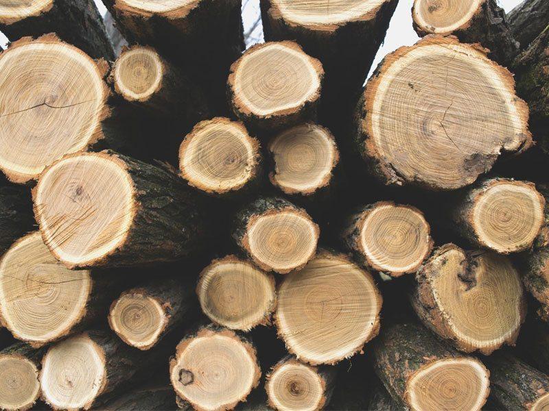 Schuster Innenausbau aus Salach – Holzauswahl Innenausbau